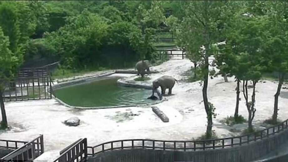 Elephant family saves calf from drowning at a Zoo in Seoul.