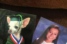 """""""I've been recreating family pictures with my dog and slowly replacing them around the house to see if my mom would notice. She wasn't amused,"""" Marissa Hooper tweeted on June 17, 2017, causing a viral reaction."""