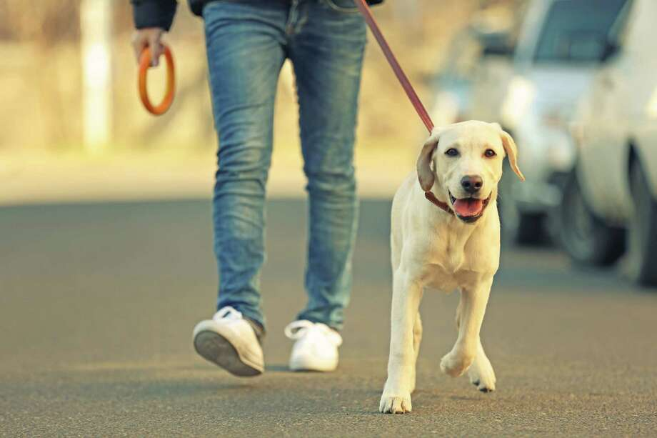 Issues such as leash areas or where to exercise your pet, should also be examined before moving forward.