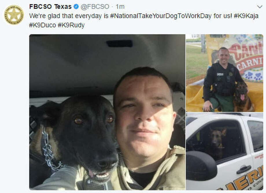 The Fort Bend County Sheriff's Office celebrates their K9 partners on Bring Your Dog to Work Day, Friday, June 23, 2017.Keep going for a look at how other officers are celebrating Bring Your Dog to Work Day. Photo: Twitter