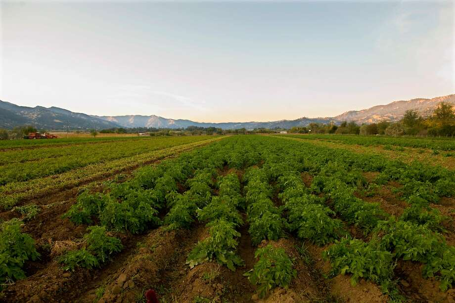 Full Belly Farm covers 350 in Yolo County. Photo: David Paul Morris, Special To The Chronicle