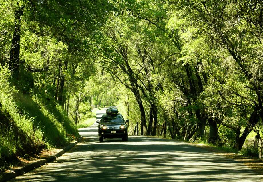 Six Mile Road in the heart of Gold Country provides a scenic drive through a canopy of trees in the town of Murphys, Calif., on May 2, 2017. (Mark Boster/Los Angeles Times/TNS) Photo: Mark Boster, MBR / Los Angeles Times