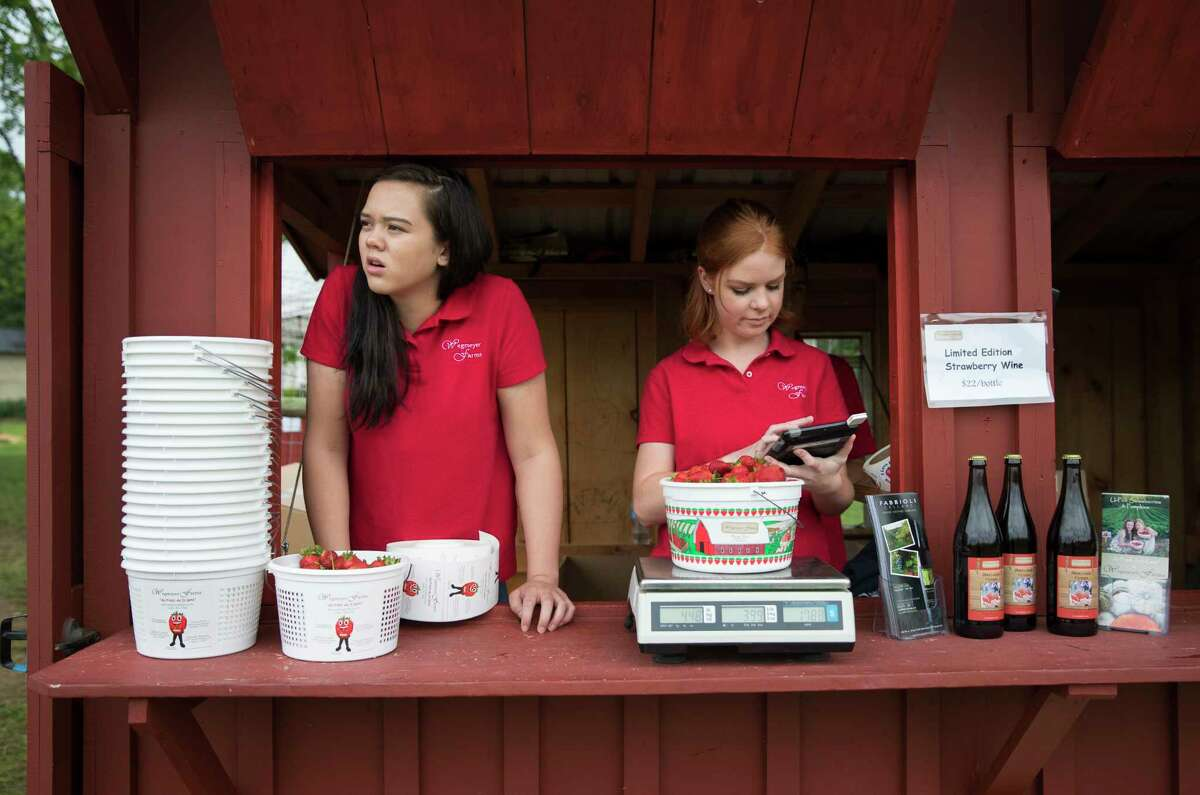 In this Tuesday, May 23, 2017, photo, Hannah Waring, left, a student at Loudoun Valley High School, and Abby McDonough, a student at Liberty University, work in the strawberry stand at Wegmeyer Farms in Hamilton, Va. Waring and McDonough are working at Wegmeyer Farms for the summer. Summer jobs are vanishing as U.S. teens spend more time in school and face competition from older workers. (AP Photo/Carolyn Kaster) ORG XMIT: VACK202