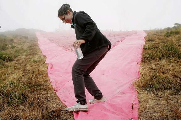 Angela Tolwani heads down the hill for a better view of the Pink Triangle at Twin Peaks on Saturday, June 24, 2017, in San Francisco, Calif. The Pink Triangle is a remembrance of the years of discrimination and physical attacks on the LGBT community. Tolwani helped with the installation of the triangle.