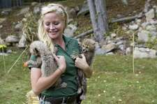LEO Zoological Conservation Center Founder and Director Marcella Leone holds two cheetah cubs born at the Center in 2014. Leone has purchased Lion Country in Florida and plans to move some of the Center animals there.