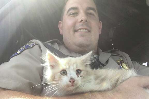 CHP officers rescued a kitten stranded on the Golden Gate Bridge Saturday, June 24. Officer Smith, one of the rescuers, is fostering the kitten and nursing it back to health.