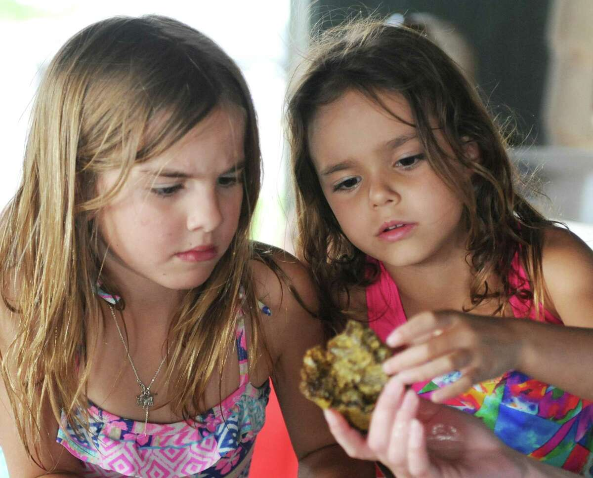 Greenwich's Clara Matoso, left, 7, and Old Greenwich's Marina Galindo, 6, look at a sea sponge in a live marine tank during the