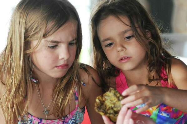 """Greenwich's Clara Matoso, left, 7, and Old Greenwich's Marina Galindo, 6, look at a sea sponge in a live marine tank during the """"Experience the Sound: From Streams Through Soil to Sea"""" event at Greenwich Point Park's Seaside Center in Old Greenwich, Conn. Sunday, June 25, 2017. Presented by the Greenwich Shellfish Commission, the event featured a live marine tank at the Bruce Museum Seaside Center, an Osprey documentary screening, drone and tech demos, bike ride with the Greenwich Historical Society, Old Greenwich Yacht Club tour, and a raw bar with oyster and clam boat tours."""