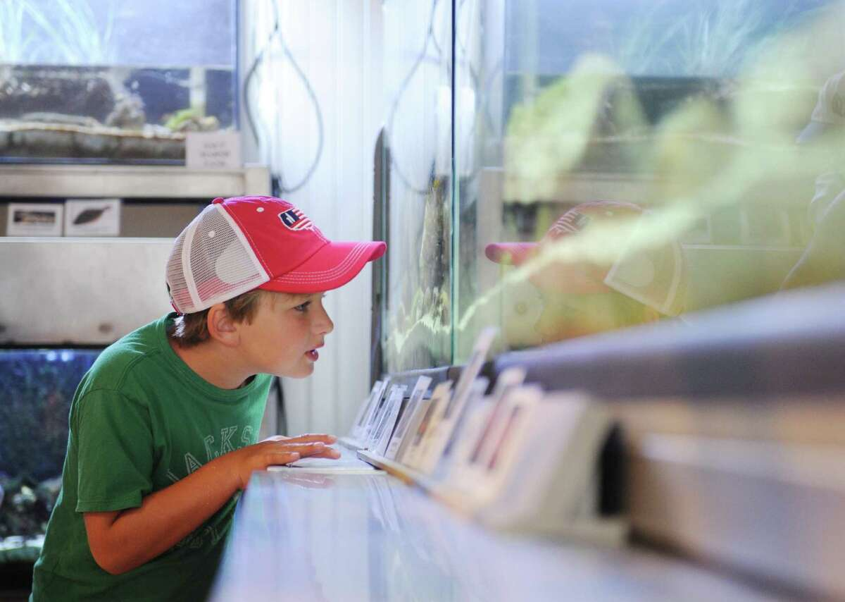 Jack Giffin, 7, of Greenwich, looks at fish in a marine tank during the