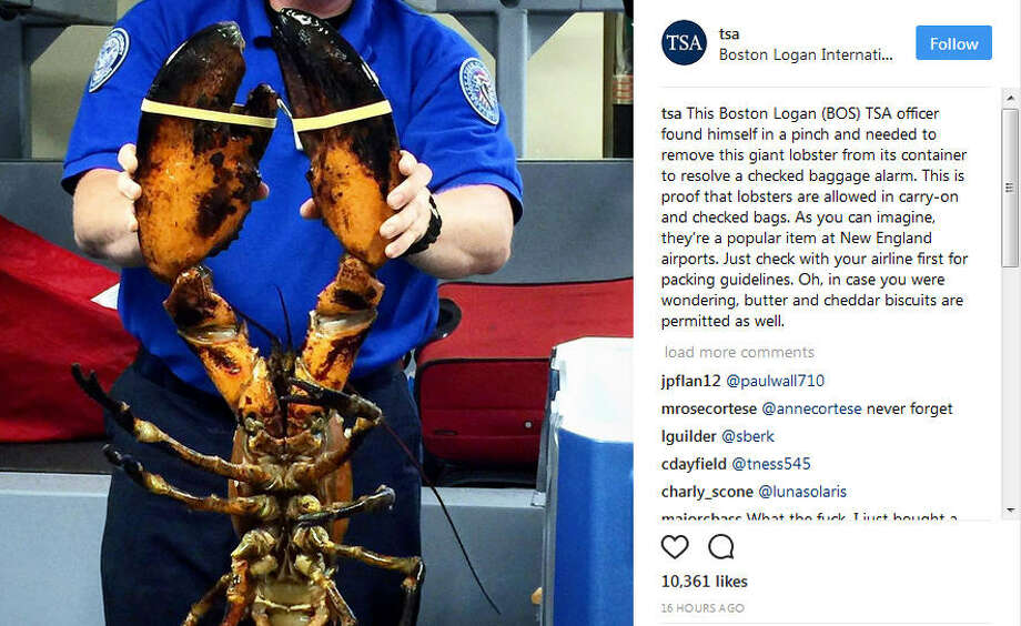 On Monday night the Transportation Security Administration's Instagram shared a photo of a huge lobster at Boston's Logan International Airport.As it turns out, lobsters are allowed in carry-on items and checked bags.Click through to see what other strange items the TSA has found in securitychecks... Photo: TSA Instagram