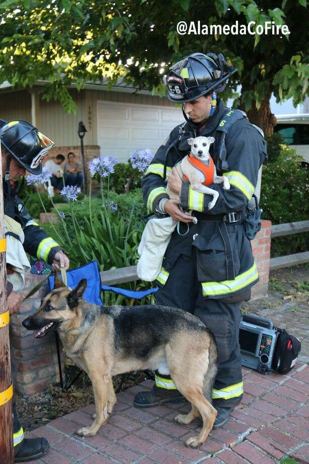 Firefighters rescued two dogs during a Castro Valley fire early Tuesday, officials said. Photo: Alameda County Fire Department