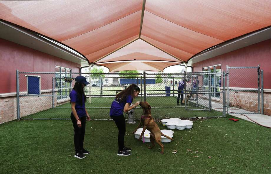 Foreign exchange students Emel Hyusein (center) of Bulgaria and Kashishi Kukreja of Pakistan spend time with a dog at Animal Care Services after volunteering at the San Antonio Food Bank on Saturday, Apr. 1, 2017. For two decades, Connie and John Coutu have welcomed nearly 50 foreign students into their homes through Ayusa, an international exchange student program. The couple is currently hosting Hyusein and Kukreja, who have grown as close as sisters over the past few months as they attended school and explored San Antonio and Texas together. However, recent actions by the Trump administration could have an impact on the program that fosters international relations and previously helped relocate a cohort of Yemeni students who could not return home because of the civil war. First there was the travel ban, which the girls say has chilled applications to study abroad back in their home countries. Then there was the recent release of Trump's budget, which included major cuts to education, social service and international programs -- including Ayusa, which receives funding through the Bureau of Educational and Cultural Affairs, an arm of the State Department. We spend time with the family and talk with them about what the program has come to mean to them. (Kin Man Hui/San Antonio Express-News) Photo: Kin Man Hui, Staff / San Antonio Express-News / ©2017 San Antonio Express-News