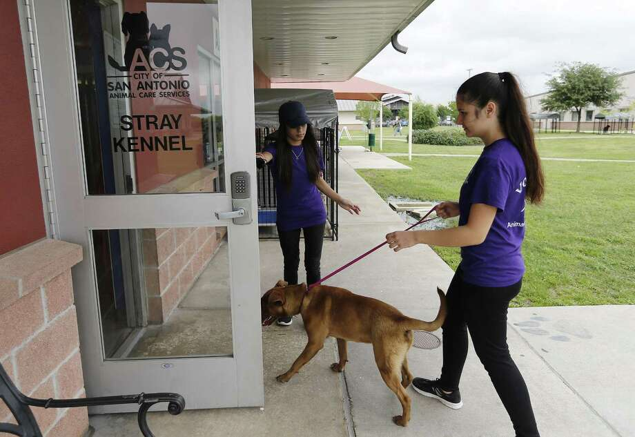 Animal Care Services hit a live release rate of 91.5 percent in 2017, meeting finally the threshold for a no-kill program. Photo: Kin Man Hui /San Antonio Express-News / ©2017 San Antonio Express-News
