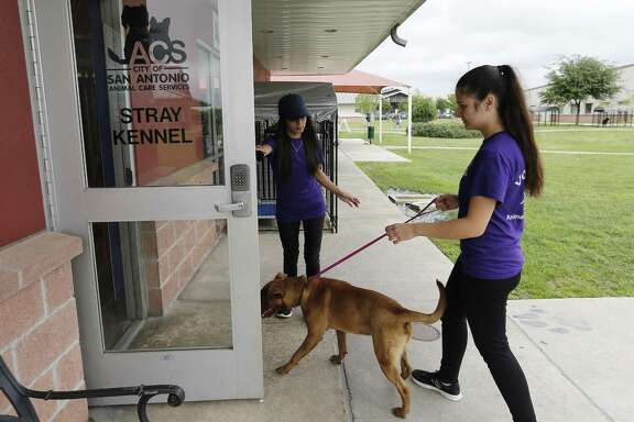 Animal Care Services hit a live release rate of 91.5 percent in 2017, meeting finally the threshold for a no-kill program.