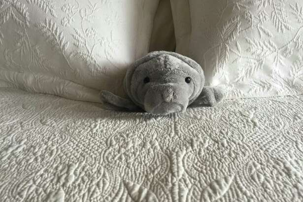 The Sootheze stuffed manatee — where it is supposed to be.