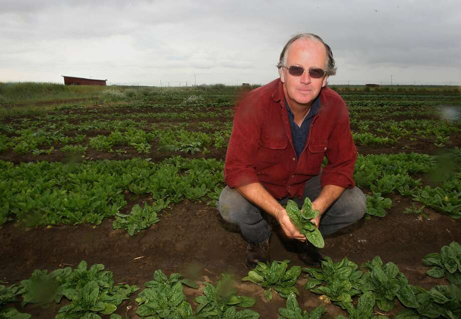 Nigel Walker with his spinach crop in Dixon in 2010 Photo: Liz Hafalia, The Chronicle
