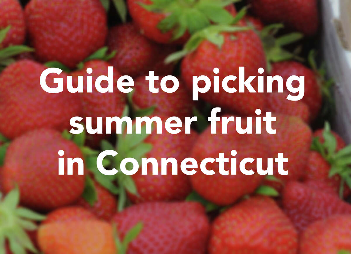 Everyone goes apple picking in the fall, but summer yields its own fruit ripe for the picking, literally. There are plenty of farms in Connecticut where you can pick your own summer fruits. Find out when and where.