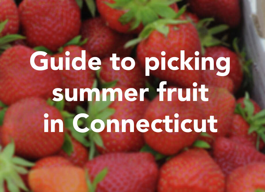 Everyone goes apple picking in the fall, but summer yields its own fruit ripe for the picking, literally. There are plenty of farms in Connecticut where you can pick your own summer fruits. Find out when and where. / Connecticut Post