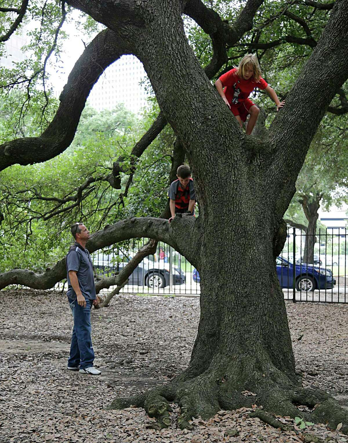 Whether they have a historic meaning or just serve as a convenient hitching post, Texans know there's something special about the old, majestic trees that dot our landscape. ( James Nielsen / Houston Chronicle )