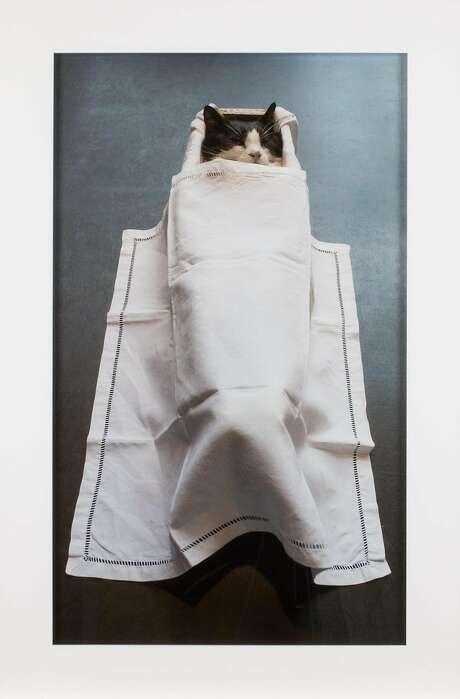 """Sophie Calle's """"Autobiographies (Mouse)"""" (2017), a photograph accompanied by framed text, documents the death of the artist's cat Souris. Photo: Photo � Kate Elliott, Courtesy FraenkelLab, � 2017 Sophie Calle / Artists Rights Society (ARS), New York / ADAGP, Paris"""