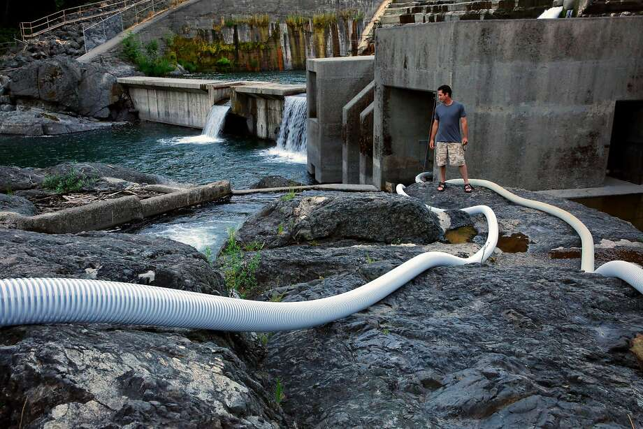Damon Goodman, fish biologist with the U.S. Fish and Wildlife Service, oversees a system of PVC tubes designed to help the lampreys, below, make their way up the Lake Arsdale Dam along the Eel River in Mendocino County. Photo: Michael Macor, The Chronicle