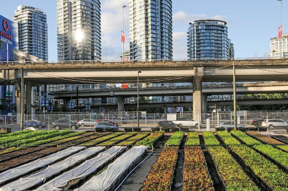 False Creek Farm, part of Sole Food Street Farms, grows food on a former parking lot in Vancouver, British Columbia. Photo: Mitch Ableman