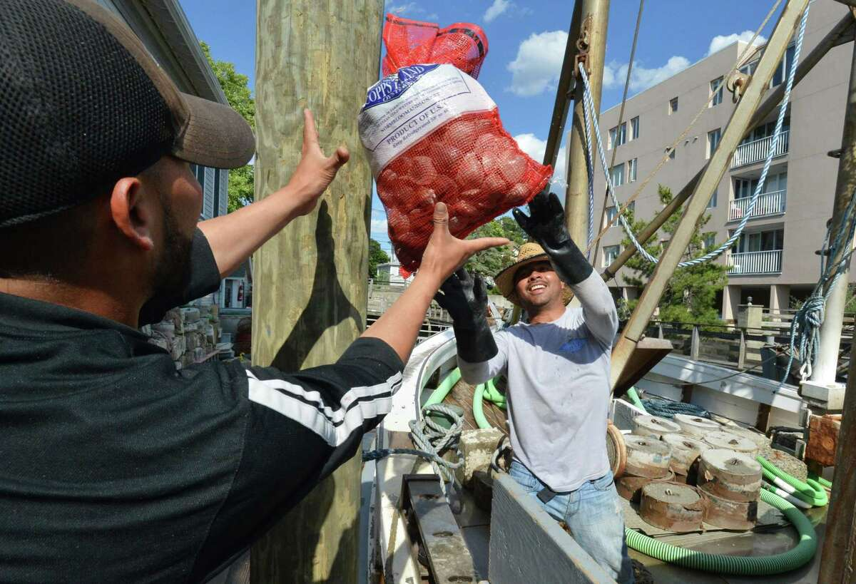 Crew members from the Vigilant unload bags of clams just harvested at Copps Island Oysters in Norwalk on Wednesday, June 28. An informational tablet about the history of oystering in Norwalk is along the Norwalk River Vally Trail.