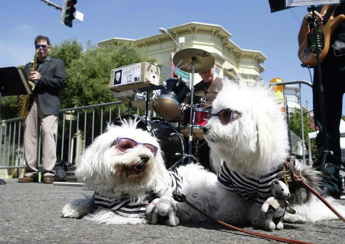 Chloe and Ruby settle in for a performance by Street Brew on Pine Street during the annual Fillmore Jazz Festival in San Francisco.
