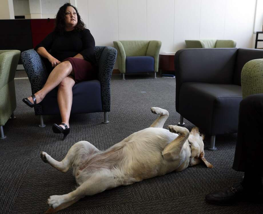 Therapy dog Pink begs for some attention by rolling over as Dr. Gena Castro Rodriguez chats in her Hall of Justice office. Photo: Carlos Avila Gonzalez, The Chronicle