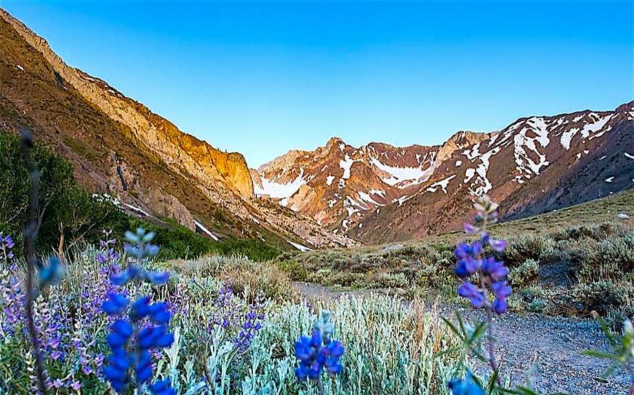 The front country of the Eastern Sierra with blooming lupine looking up toward McGee Canyon Photo: Tom Stienstra, Leeann Murphy / Special To The Chronicle