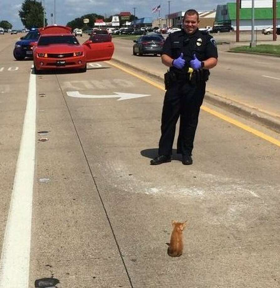 Arlington police officer Austin Kidd rescued a kitten that ran underneath a car on July 4, 2017.Keep clicking to see an ocelot kitten that's been spotted in South Texas. Photo: Arlington Police Department