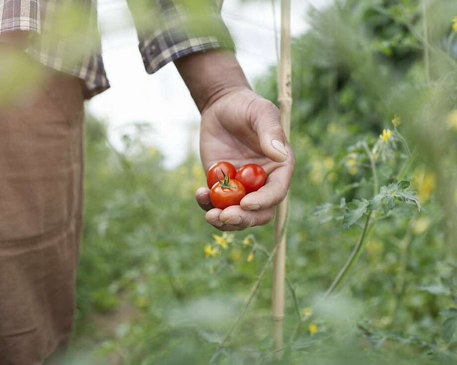 A man wants to be a homesteader. Photo: Dougal Waters, Getty Images