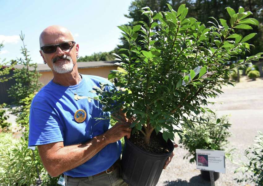 Employee Randy Herrington holds a burning bush at Faddegon's Nursery on Wednesday, July 5, 2017 in Latham, N.Y. NYS has deemed this plant an invasive species and harmful to the environment. NYS has approved a type of now-banned invasive plant for commercial sale. Called a Japanese barberry, the new version of the plant had been made sterile, and thus cannot spread. (Lori Van Buren / Times Union)