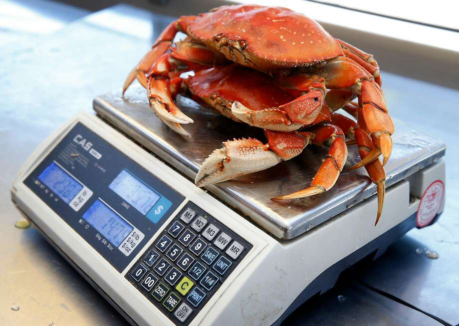 A pair of Dungeness crabs from Washington state are weighed before being cracked and served at Tarantino's restaurant on the wharf. Photo: Paul Chinn, The Chronicle