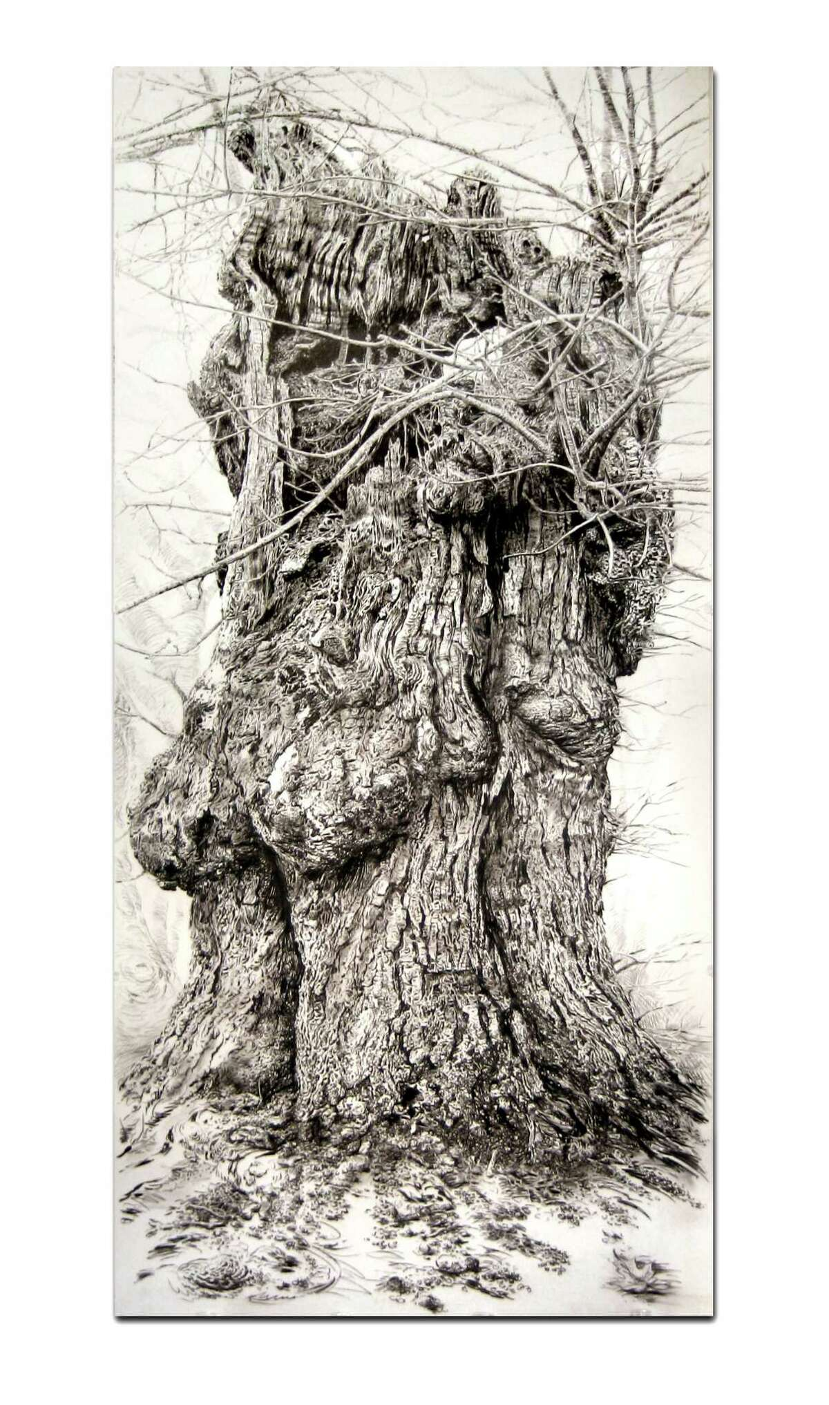 """""""Sugar Maple"""" by Fairfield artist Rick Shaefer was named Best in Show at the 67th annual Art of the Northeast exhibit at Silvermine Art Gallery."""