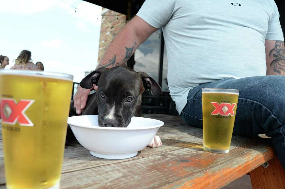 Betty, the resident canine at the Republic House in Deer Park, laps water while some of the customers have a beer. A number of businesses in the area welcome well-behaved dogs to share the dining experience with their human friends. Photo: Yvette Orozco
