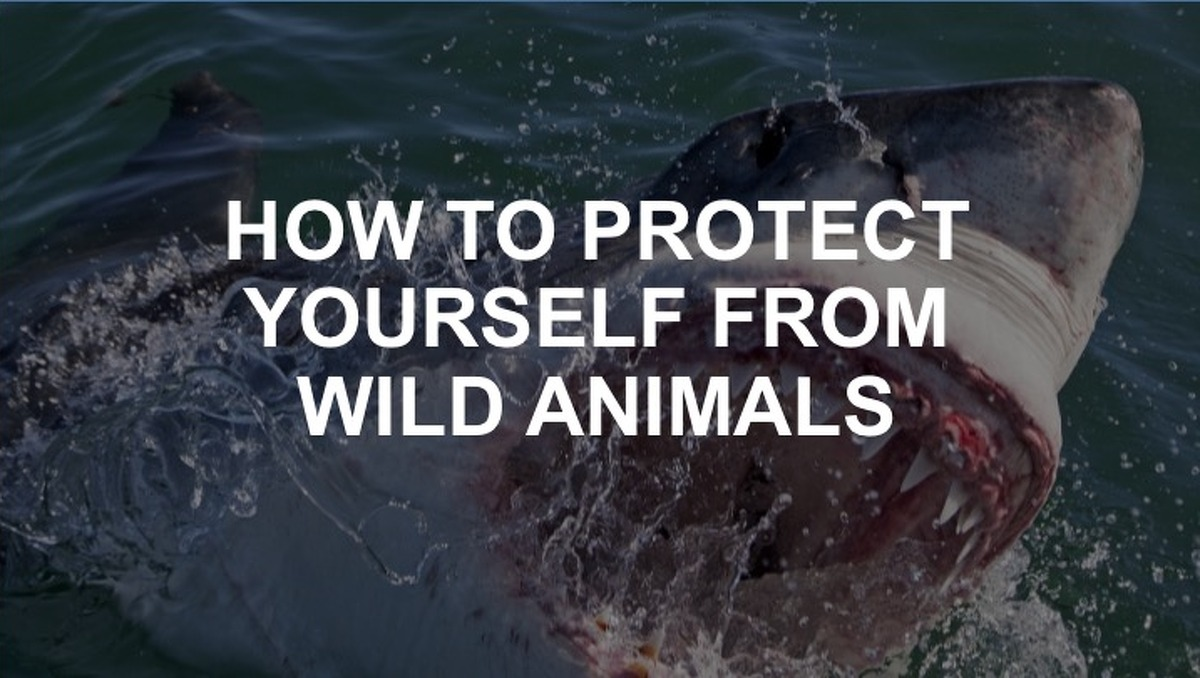 Most creatures you'll find in the wild just want to stay out of your way. But just in case, click on to read tips on how to walk away from close encounters unhurt.