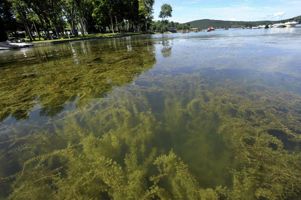 An area of Candlewood Lake in Brookfield that has a high density of Eurasian Watermilfoil, Tuesday, August 9, 2016.