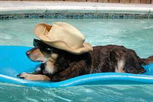 Who doesn't want to take a dip with their dog? Just follow these water safety tips.