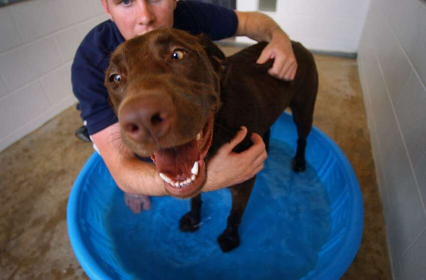 Start simple and shallow. Ideally you want to introduce your dog to the water when he's a puppy, but dogs can learn to love a soak at any age - with the right gentle touch and positive reinforcement. One easy way to start is with your bathtub or a baby pool. Fill either with an inch or 2 of water and reward your dog for getting in. Rinse and repeat.