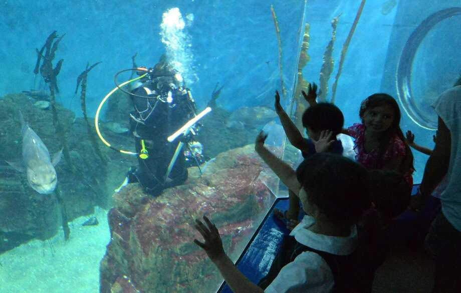 "During Shark Dive Thursday, the Maritime Aquarium at Norwalk's dive team swims among the sand tiger sharks, lemon sharks in the 110,000-gallon ""Ocean Beyond the Sound"" exhibit. While legislators in Hartford work to sort out the state budget, Norwalk's nonprofits are growing increasingly concerned about the impact that impending cuts will have on the people they serve every day. Photo: Alex Von Kleydorff / Hearst Connecticut Media File / Connecticut Post"