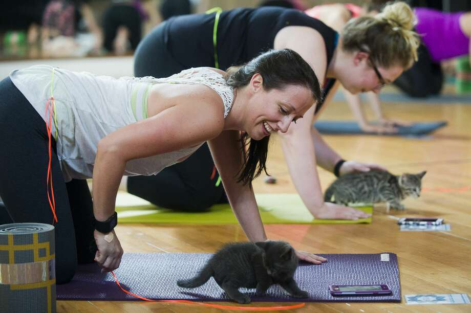 Jennifer Wilk of Saginaw plays with a kitten during a ÒCats on Yoga MatsÓ class hosted by The Humane Society of Midland County and Alignment 8 yoga on Friday, July 7, 2017 at The Lofts of Ashman Plaza. Photo: (Katy Kildee/kkildee@mdn.net)