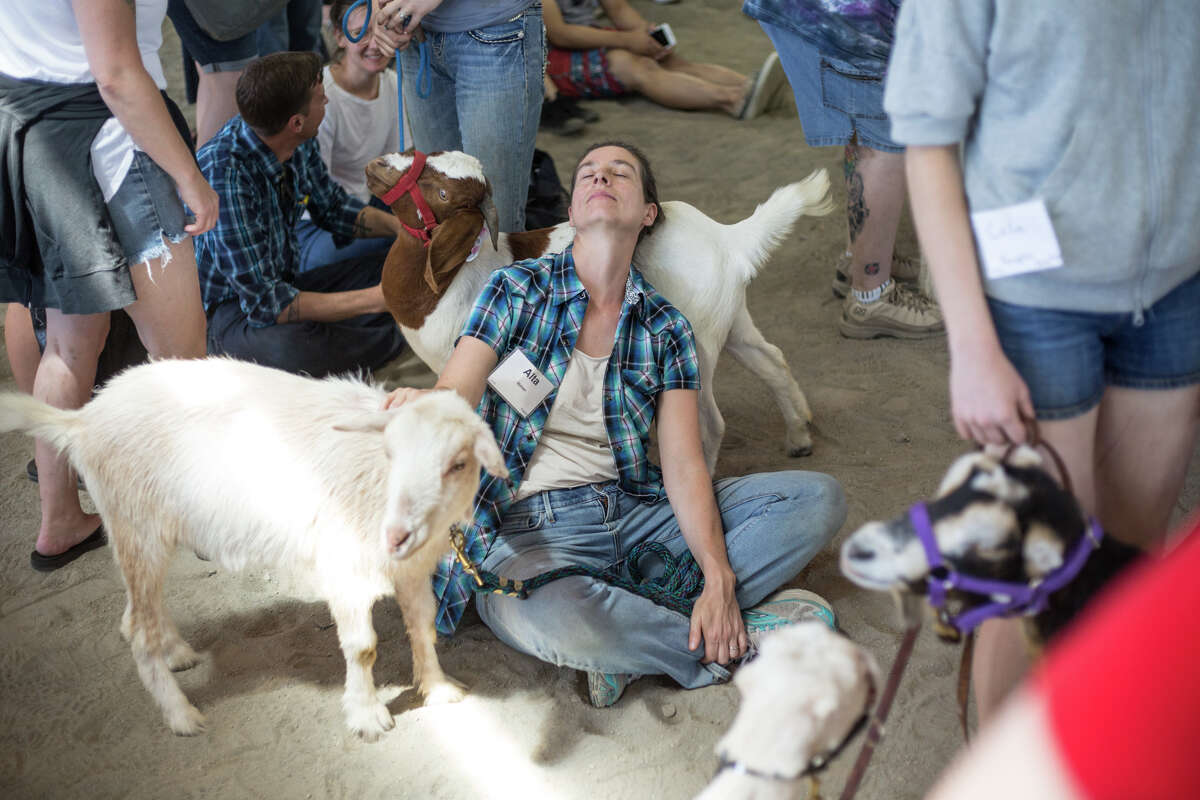 Alta Mahan rests with her goat Preston between events during New Moon Farm's Goatalympics at the Evergreen State Fairgrounds in Monroe on Saturday, July 8, 2017.
