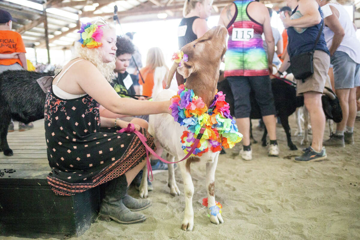 Benji and handler Gracie Garcia wait for the goat-owner lookalike competition to begin during New Moon Farm's Goatalympics at the Evergreen State Fairgrounds in Monroe on Saturday, July 8, 2017.