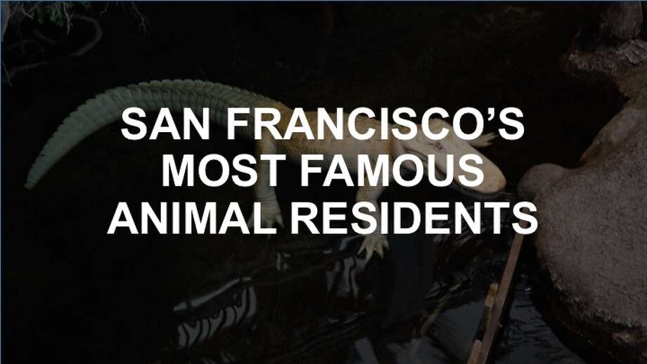 Click on to see some of SF's best-known nonhuman celebrities.