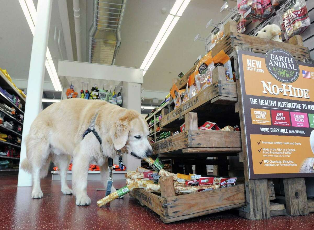 Romeo, a Golden Retriever belonging to Don Romeo of Greenwich, shops at Pet Pantry's newest location at 1191 E. Putnam Ave., in the Riverside section of Greenwich, Conn., Friday, July 7, 2017.