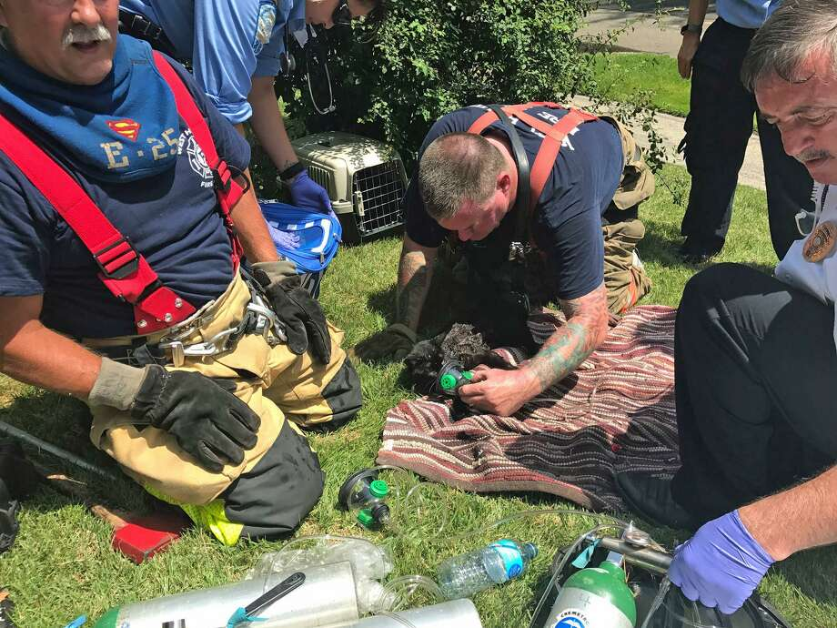 Firefighters work to save one of the cats from inside the house on Linden Avenue in West Haven on Monday, July 10, 2017. Photo: West Haven Police Photo
