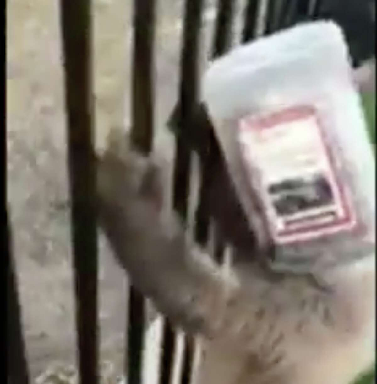 A baby bear got a plastic jug stuck on its head, and police officers had to rip it off.