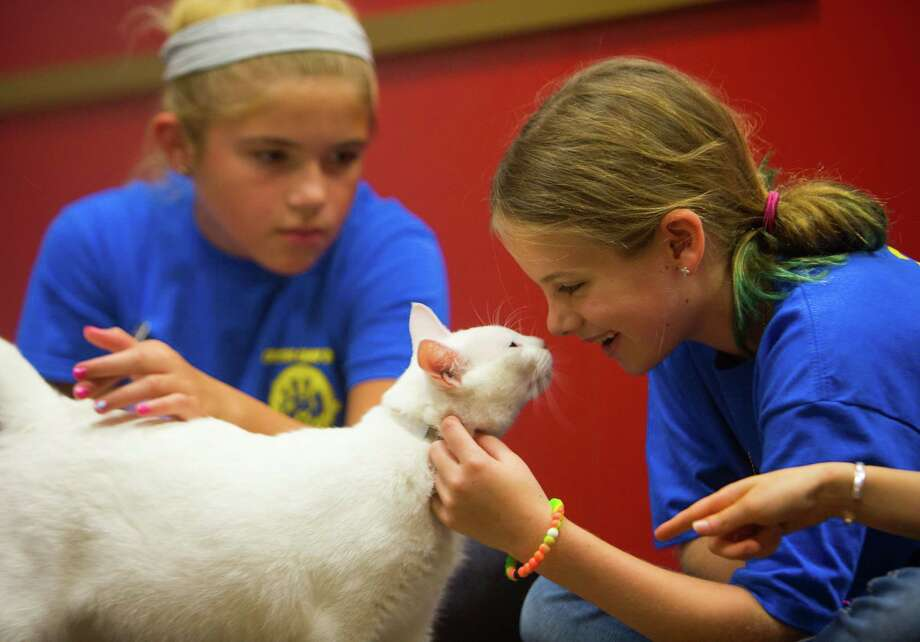 Nine-year-old Ainsley Gailey interacts with a seven-year-old cat during the Houston SPCA's Junior Vet Critter Camp for third and fourth graders, Tuesday, July 11, 2017. Campers spent the morning learning about animal neglect, what to do to prevent it, and why animals end up at the shelter. They also learn how to properly treat and pet animals. Participants in the week-long camps, which vary in theme and age group, run through the beginning of August. Photo: Mark Mulligan, Mark Mulligan / Houston Chronicle / 2017 Mark Mulligan / Houston Chronicle