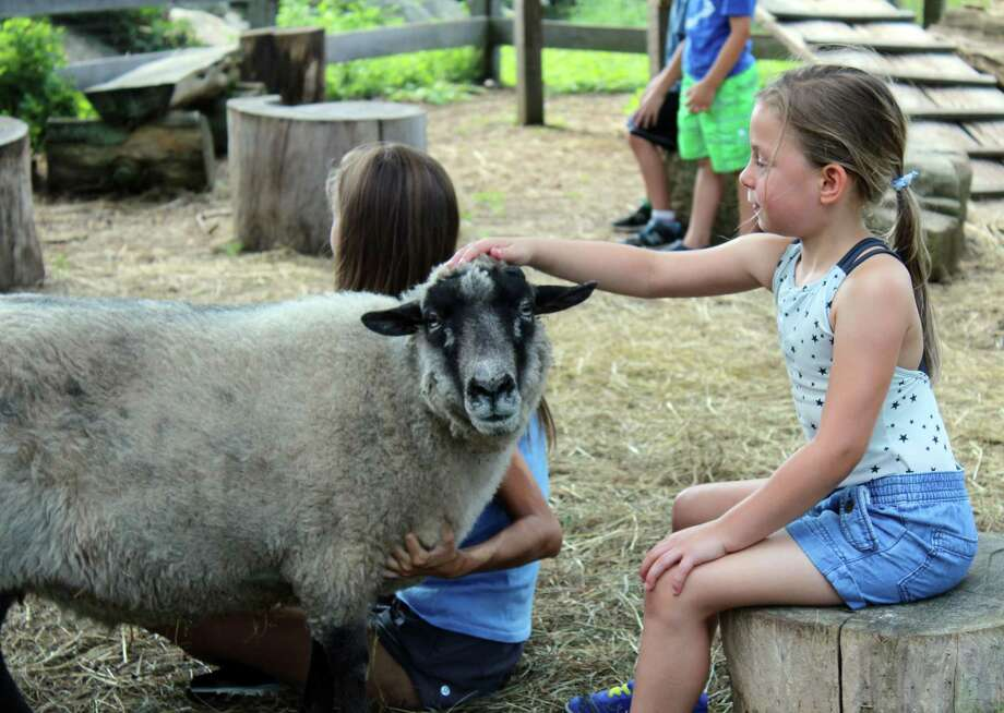 "Ayla Ciano-Buckley pets a goat at Ambler Farm during its summer program, ""Adventures at the Farm, on Wednesday, July 12, 2017. Photo: Stephanie Kim / Hearst Connecticut Media"